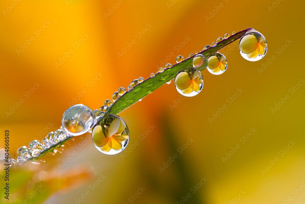 Fototapeta Close-up Of Water Drops On Twig