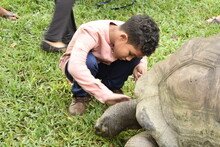 Boy Touching Tortoise While Crouching On Footpath