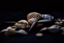 Seashell And Rocks On A Black Surface