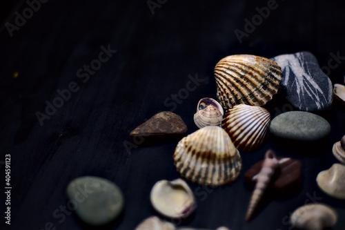 Canvastavla Seashell and rocks on a black surface