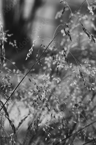 Fototapety, obrazy: Raindrops On Twig