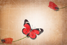 Single Red Petal On Corolla Of The Poppy Flower Steam. Red Butterfly. Minimalist Style Photo. Old Paper Textured Image. Minimalism Natural Visual Concept