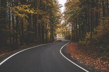 Asfaltowa Droga W Lesie Bukowym W Jesiennej Oprawie