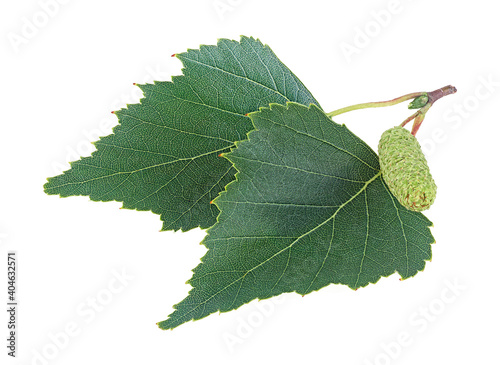 Fotografie, Obraz Two leaves of the silver birch and catkin isolated on a white background