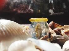 Close-up Of Sea Horse In Jar Amidst Seashells