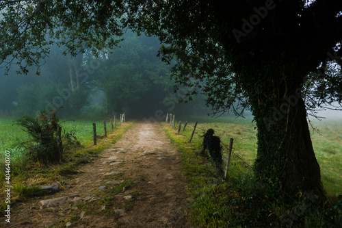 Camino de Santiago entre niebla Fototapet