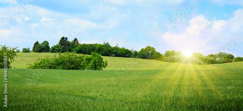 Fototapeta Spring landscape with flowers meadow in the sunlight . obraz