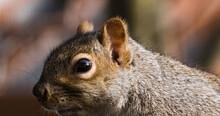 Vue Rapprochée D'un écureuil Urbain Devant Un Fond Flou Et Coloré.