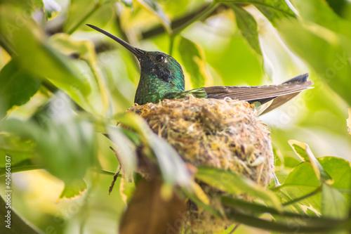 Fototapeta premium Close-up Of Bird Perching On Tree