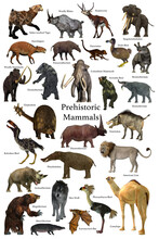 Prehistoric Mammals - A Collection Of Some Of The Better Known Mammals That Lived During The Cenozoic Era.