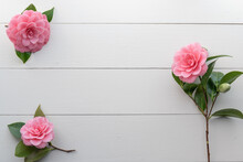 Three Pink Camellia Flowers On White Wood Background