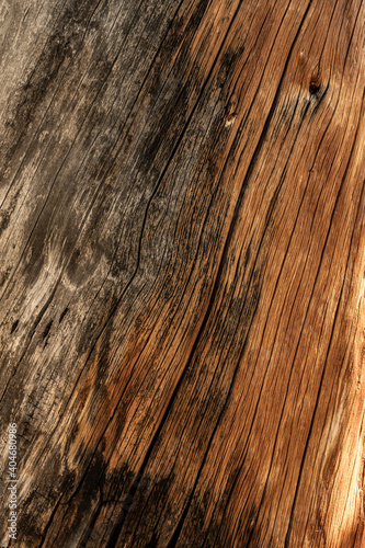 Canvas Print Weathered Wood Texture Shows Where Bark Is Gone