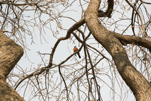 The Dark-eyed Junco Bird On The Dry Tree