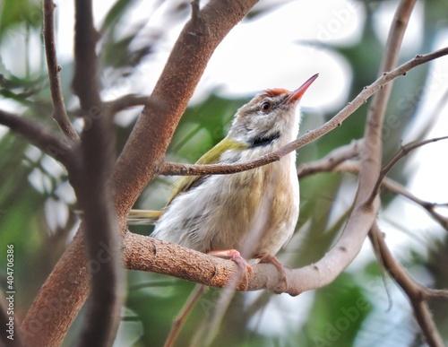 Fototapeta premium Low Angle View Of Bird Perching On Tree
