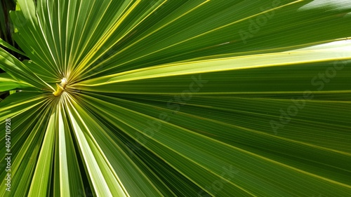 Obraz Close-up Of Palm Leaf - fototapety do salonu