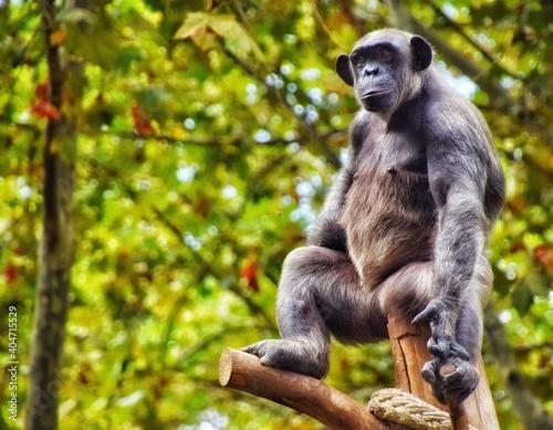 Monkey Sitting On Tree Fototapet