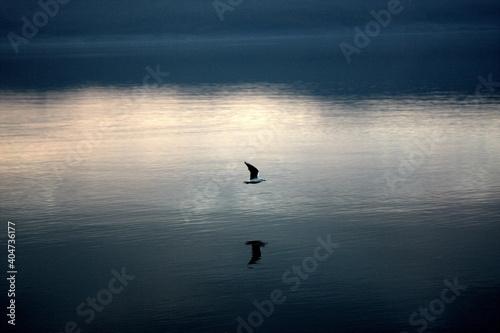 Fotografie, Tablou Silhouette Birds Flying Over Lake