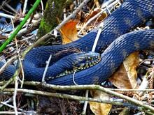 North America, United States, Florida, Snakes
