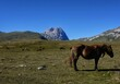 Horses At The Campo Imperatore