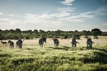 Südafrika Safari, South Africa Safari