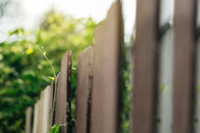 Close-up Of Fence Against Ivy Gourd Plants