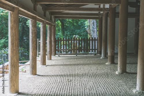 Fototapeta 【奈良公園】奈良