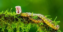 Green Caterpillar On A Leaf