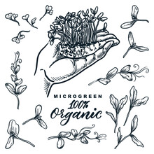 Microgreen Sprouts Set. Hand Holds Growing Herbs And Plants Sketch Vector Illustration. Natural Organic Food Ingredients