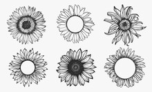Sketch Of Sunflower Set. Hand Drawn Outline. Vector Illustration.
