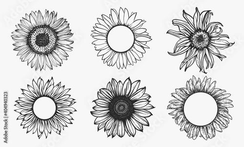 Sketch of sunflower set. Hand drawn outline. Vector illustration.