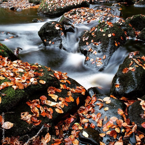 Fotomural High Angle View Of Autumn Leaves In Lake