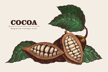 Cocoa Beans Set In Vintage Style. Vector Engraving Illustration. Template For Design