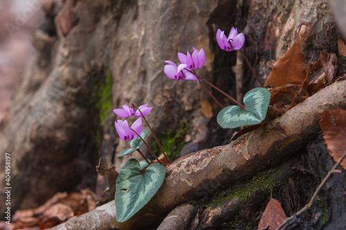 Obraz Close-up Of Pink Flowering Plant - fototapety do salonu