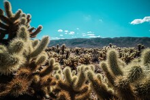 Cactus Plants Growing On Land Against Blue Sky