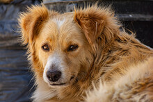 Rostro De Un Perro En Primer Plano Con Silueta De León