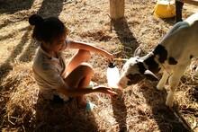 Side View Of Teenage Girl Feeding Milk To Calf At Farm