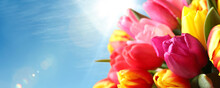 Beautiful Bright Spring Tulips And Blue Sky On Background, Space For Text. Banner Design
