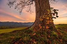 Base Of Large Tree At Sunet