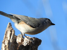 Low Angle View Of A Tufted Titmouse On Rock Against Blue Sky