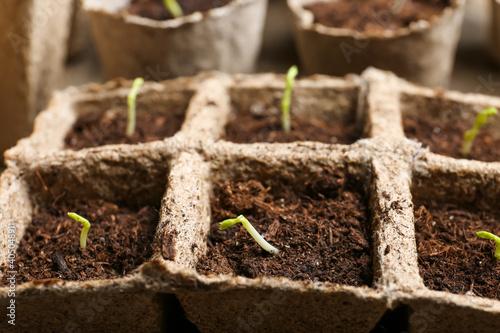 Plants seedlings in peat pots, closeup