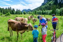 Junge Familie Macht Pause Bei Einer Kuhherde Bei Einer Radtour Im Oberallgäu