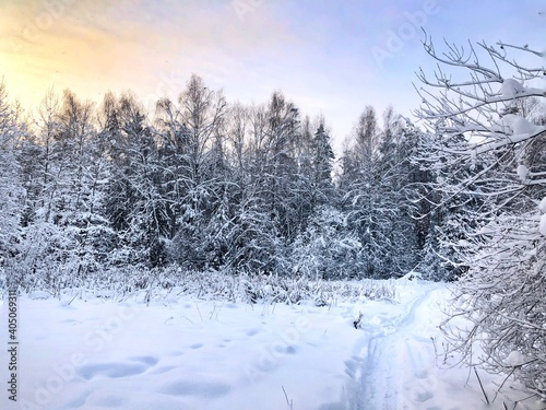 Snow Covered Trees On Field Against Sky #405069311