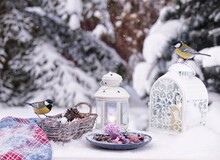 Close-up Of Bluetits Perching On Lantern And Wicker Basket On Table