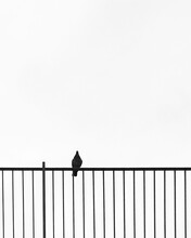 Grayscale Photography Of Bird Perching On Rail