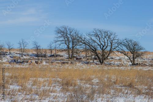 Obraz Bare Trees On Field Against Sky During Winter - fototapety do salonu