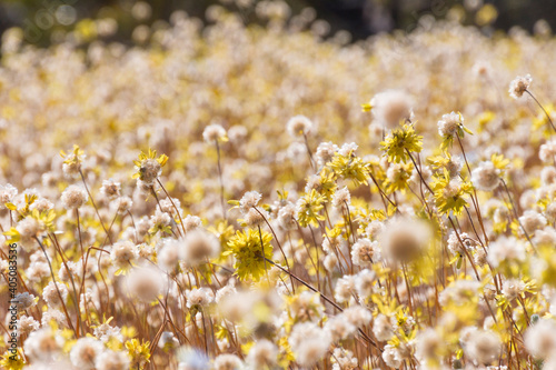 Fototapety, obrazy: Close-up Of Yellow Flowering Plants On Field