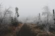 Droga otoczona przez młody las