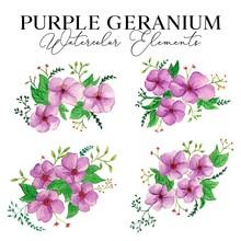Purple Geranium Watercolor Illustration