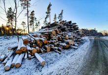 Timber Among Road
