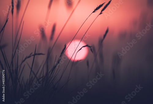 Foto Close-up Of Silhouette Plants Against Sunset Sky